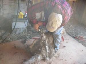 Starting shearing